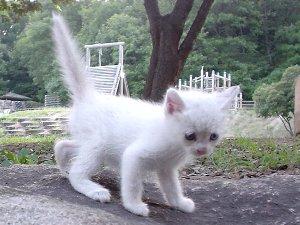 白い子猫発見!!